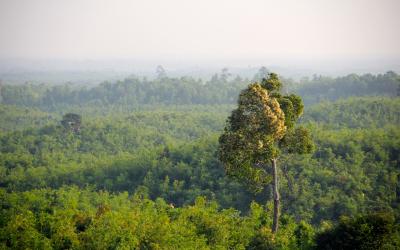 jungle-1029330_1920
