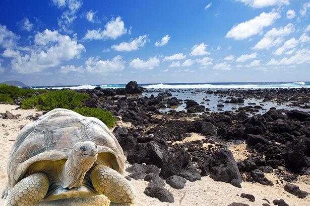 galapagos teknős