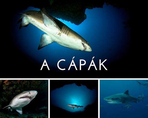 Dél-Afrika cápák búvárkodás