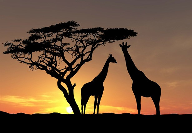 Del Afrika búvárkodás
