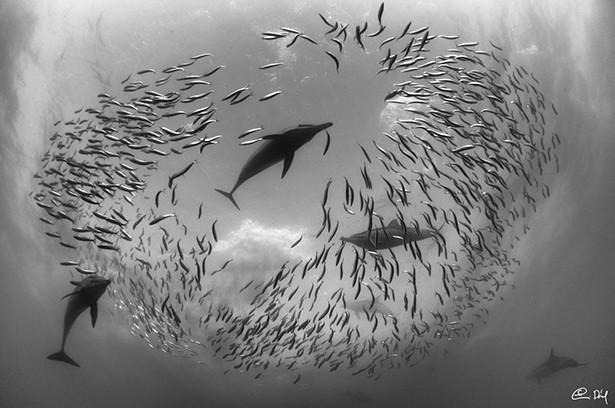 Dél Afrika delfinek búvárkodás