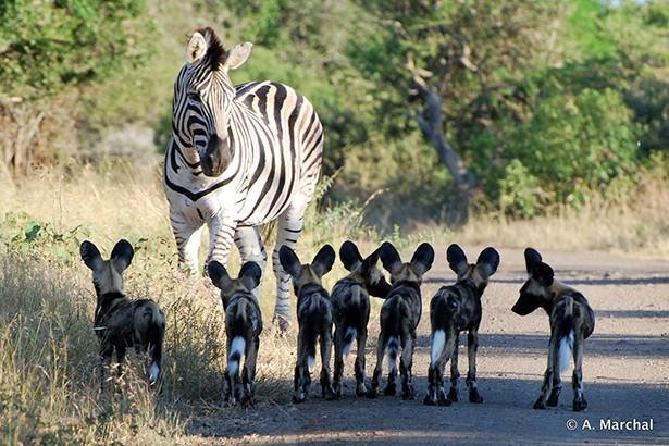Hluhluwe Nemzeti Park Dél-Afrika
